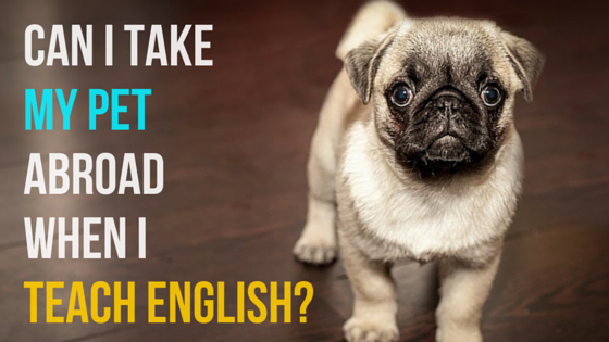 Can you take your pet with you when you teach English abroad?