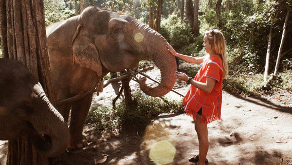 A Bridge grad pets an elephant in Thailand.