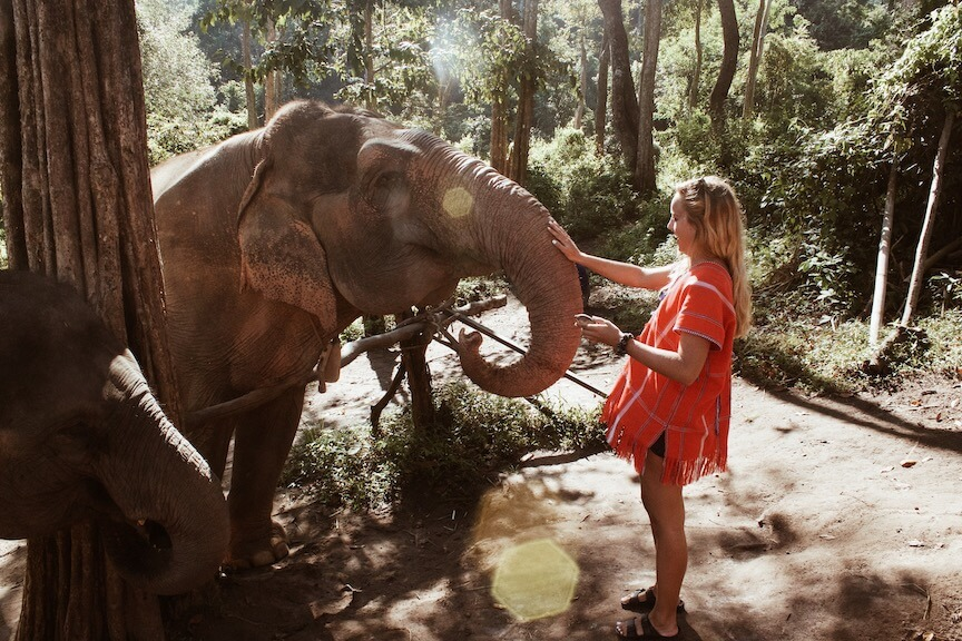 teacher petting elephant in Thailand