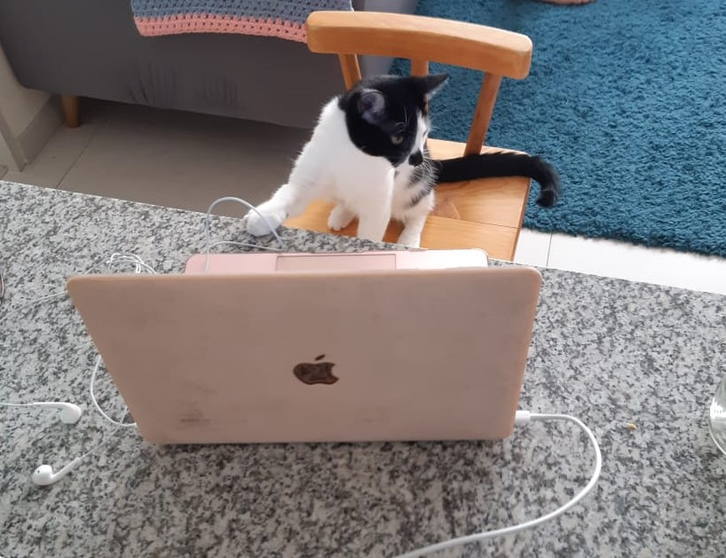 Elaine' cat, Sophie, sometimes takes over her workspace.